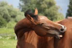 Úrazové pojištění dospělých - Muže kousnul kůň doruky