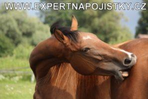 Úrazové pojištění dospělých - Muže kousnul kůň do ruky jarmila mlýnková úraz expert na pojistky